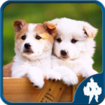 Dogs Jigsaw Puzzles 1.9.0 (Mod Unlimited Money)