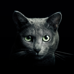 Find a Cat 5.9.3 (Mod Unlimited Money)