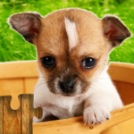 Dogs Jigsaw Puzzles Game – For Kids & Adults 🐶 28.2 (Mod Unlimited Money)