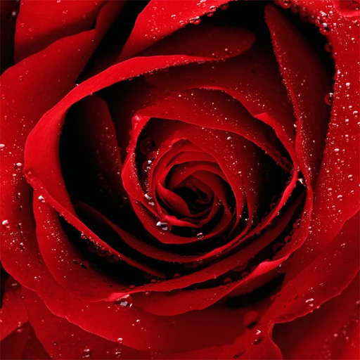 Roses Jigsaw Puzzles 2.10.0 (Mod Unlimited Money)